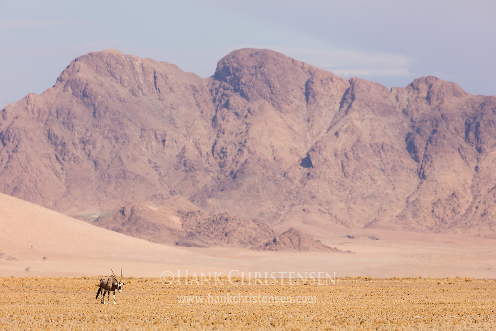A gemsbok oryx stands in front of a desert mountain, Namib-Naukluft National Park, Namibia.