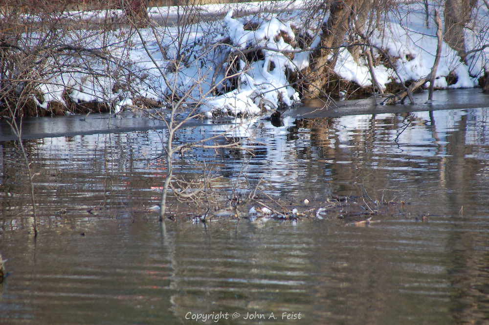 A small winter flood along the D and R Canal with trees sticking out of the water