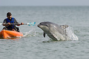 "Solitary ""friendly"" dolphin Dave with kayak. Folkestone. Kent, UK"