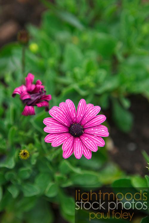 Flower, London, England