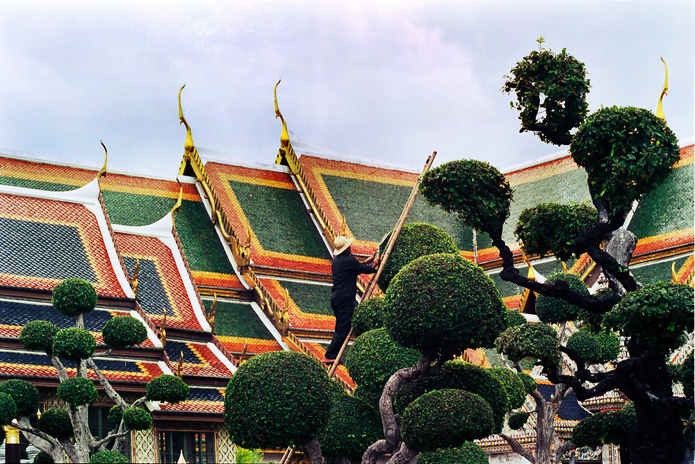 A gardener is shaping an Ilex Crenata tree inside the Royal Palace in Bangkok, Thailand.<br />