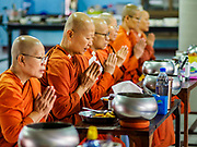 13 JANUARY 2019 - NAKHON PATHOM, THAILAND:  Female monks at Wat Songdhammakalyani pray before their breakfast after their morning alms rounds. The Sangha Supreme Council, Thailand's governing body of Buddhist monks, bans the ordination of female monks, but hundreds of Thai women have gone abroad, mostly to Sri Lanka and India, to be ordained. There are about 270 women monks in Thailand and about 250,000 male monks. There are 7 monks and 6 novices at Wat Songdhammakalyani in Nakhon Pathom. It was the first temple in Thailand to have female monks. The temple opened 60 years ago and has always been a temple of women monks. Women can be ordained as novices in Thailand, but to be ordained as a full monk would require the participation of 10 female monks and 10 male monks, and male monks in Thailand are barred from participating in women's ordination ceremonies.     PHOTO BY JACK KURTZ