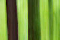 A natural abstract of a forest. Tree trunks against the surrounding green leaves.