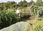 Elderly man watering flowering plants in allotment garden, Shottisham, Suffolk, England, UK