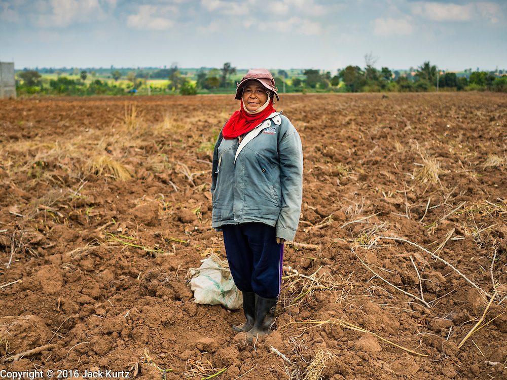 21 JANUARY 2016 - NONG YA KHAO, NAKHON RATCHASIMA, THAILAND:  A woman planting cassava in her field in Nakhon Ratchasima province Thailand. Cassava, a drought resistant root vegetable, is one of the vegetables the Thai government is encouraging farmers to grow instead of rice and other more water dependent crops. Thailand is the world's leading exporter of dried cassava flakes.  The drought gripping Thailand was not broken during the rainy season. Because of the Pacific El Nino weather pattern, the rainy season was lighter than usual and many communities in Thailand, especially in northeastern and central Thailand, are still in drought like conditions. Some communities, like Si Liam, in Buri Ram, are running out of water for domestic consumption and residents are traveling miles every day to get water or they buy to from water trucks that occasionally come to the community. The Thai government has told farmers that can't plant a second rice crop (Thai farmers usually get two rice crops a year from their paddies). The government is also considering diverting water from the Mekong and Salaween Rivers, on Thailand's borders to meet domestic needs but Thailand's downstream neighbors object to that because it could leave them short of water.     PHOTO BY JACK KURTZ