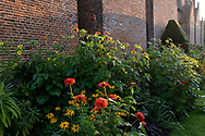 Orange Zinnias and Redbeckia in a border at Chenies Manor House, Chenies, Rickmansworth, Buckinghamshire
