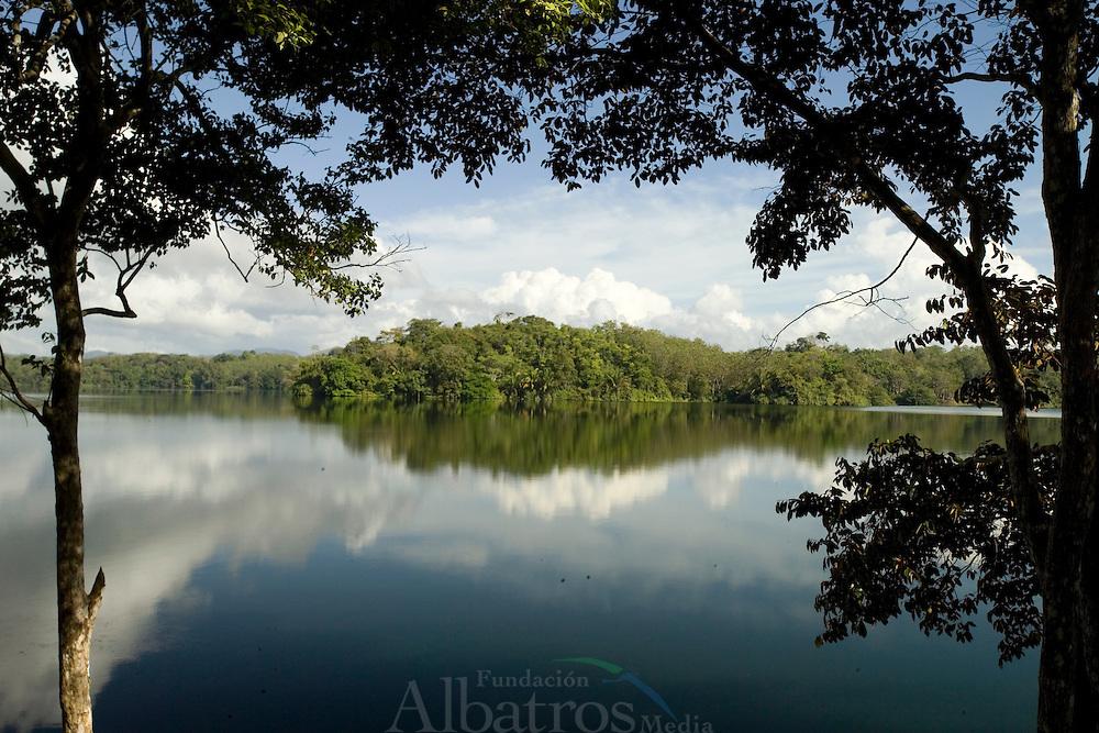 El Parque Nacional Chagres se encuentra entre las provincias de Panam&aacute; y Col&oacute;n, en la Rep&uacute;blica de Panam&aacute;. Est&aacute; situado en el sector oriental del Canal de Panam&aacute;, y su superficie total es de 129.000 hect&aacute;reas.1<br /> <br /> El parque est&aacute; formado por bosques tropicales y una serie de r&iacute;os que suministran el agua suficiente para el r&iacute;o Chagres y el lago Gat&uacute;n, que regulan el funcionamiento del Canal de Panam&aacute;.<br /> <br /> En el h&aacute;bitat del parque se pueden encontrar todo tipo de aves, entre las que destaca el piculus callopterus o carpintero paname&ntilde;o, una especie &uacute;nica en Panam&aacute;, adem&aacute;s de algunos ejemplares de &aacute;guila arp&iacute;a.<br /> <br /> Entre los mam&iacute;feros destacan el venado cola blanca, el mono ara&ntilde;a de manos negras y algunas especies de bolitoglossa. En sus densos bosques tambi&eacute;n habitan tapires, jaguares y otros grandes felinos.<br /> <br /> En el Chagres y otros r&iacute;os de la zona habitan 59 especies de peces de agua dulce, adem&aacute;s de gatos de agua, junto con caimanes de anteojos y cocodrilos.<br /> <br /> &copy;Alejandro Balaguer/Fundaci&oacute;n Albatros Media.