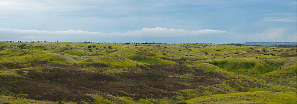Rolling hills on the Great Plains of Montana in the American Prairie Reserve region of the C.M. Russell National Wildlife Refuge. South of Malta in Phillips County, Montana.