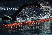 Finn Kennard-Campbell warms up, New Zealand Short Course Swimming Championships, Sir Owen G. Glenn National Aquatic Centre, AUT Millennium, Auckland. 11 August 2015. Copyright Photo: William Booth / www.photosport.nz