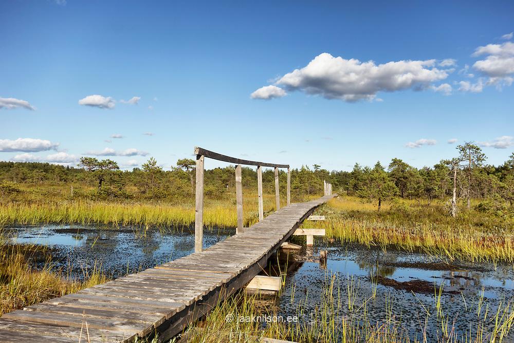 Wooden boardwalk over pools in Männikjärve bog. Jõgeva county, Estonia.