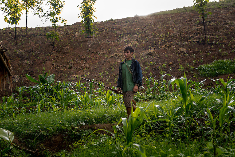 A young man walks along a jungle path in the village of Khoc Kham, looking for birds to shoot with home made shotguns.