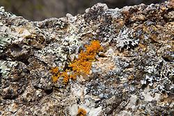 Striking orange lichen on a rock overlooking The Gulch, Bicheno.