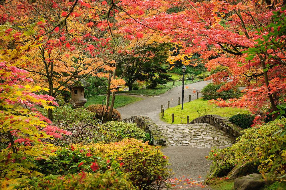 Japanese Garden in autumn, Washington Park Arboretum, Seattle, Washington.