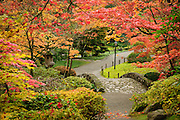 Japanese Garden in autumn, Washington Park Arboretum, Seattle, Washington.