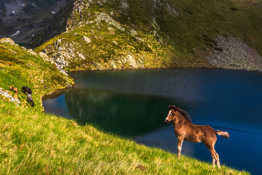Young brown horse by a mountain lake