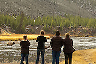 Tourist watch elk (Cervus canadensis) cross Madison River, Yellowstone National Park