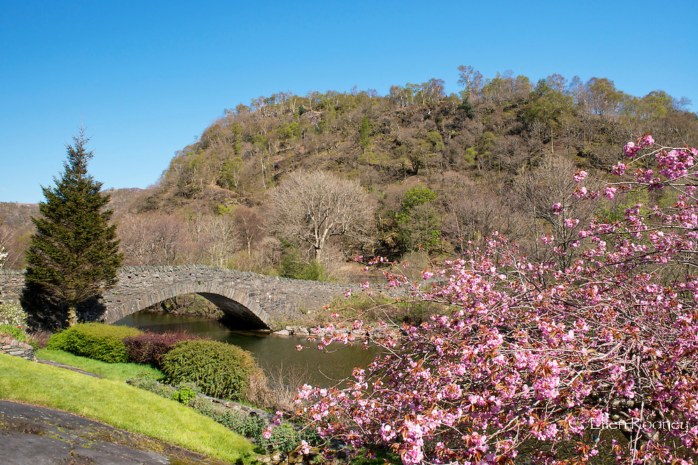 A stone bridge and chery tree in bloom in Grange in Borrowdale, Borrowdale, Lake District National Park, Cumbria, UK
