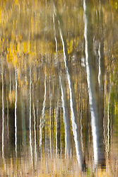 """Aspen Reflection on Water 4"" - This is a photograph of an aspen reflection on the surface of Marlette Lake."