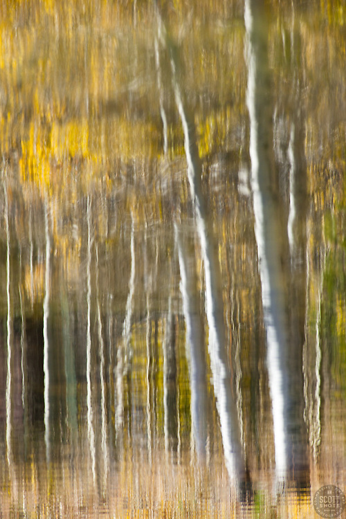 """""""Aspen Reflection on Water 4"""" - This is a photograph of an aspen reflection on the surface of Marlette Lake."""