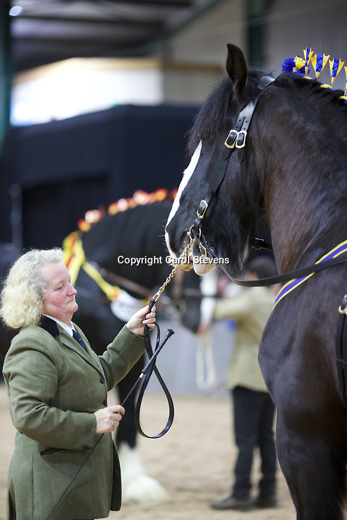 Mr M Scolaro's MANOR FARM MORE THAN LUCKY  f 2006  (No.76)<br /> Sire  Ithersay Black Knight<br /> Dam  Wasslands Pollyana<br /> Breeder<br /> Messrs H S &amp; A Callwood