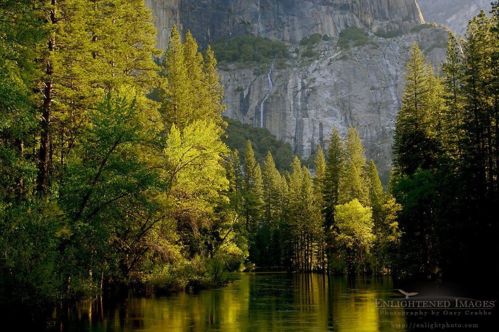 Morning light on trees along the Merced River in spring below El Capitan, Yosemite Valley, Yosemite National Park, California