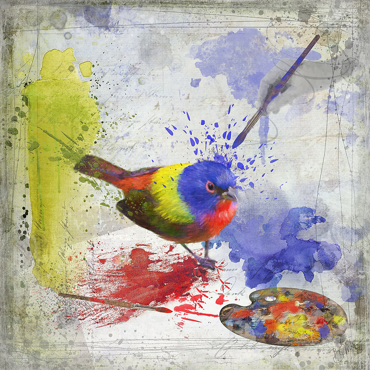 Allusion of a painted bunting being painted with splatters of red, yellow and blue paint