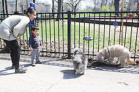 Young Tanner Zaho made two new friends Saturday afternoon while taking  a walk with his mother Fan Wang Saturday afternoon in Jackson Park.