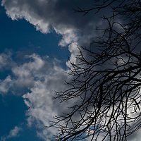 Brances of a large tree stretch outward to wards the sky.