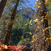 Trees wrapped in Fall color - Oak Creek Canyon, AZ
