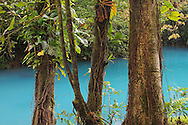 Rio Celeste (Blue River) in Tenorio Volcano National Park, Costa Rica. The blue coloration is a result of sulphur from the volcano seeping up through the river bed and mixing with calcium carbonate in the water.<br /> <br /> For pricing click on ADD TO CART (above). We accept payments via PayPal.