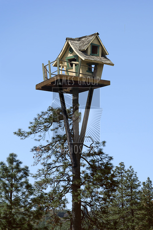 Tree house at the top of a ponderosa pine tree