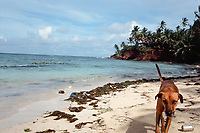 Stray dog walks beach on Little Corn Island, Nicaragua. Copyright 2017 Reid McNally.