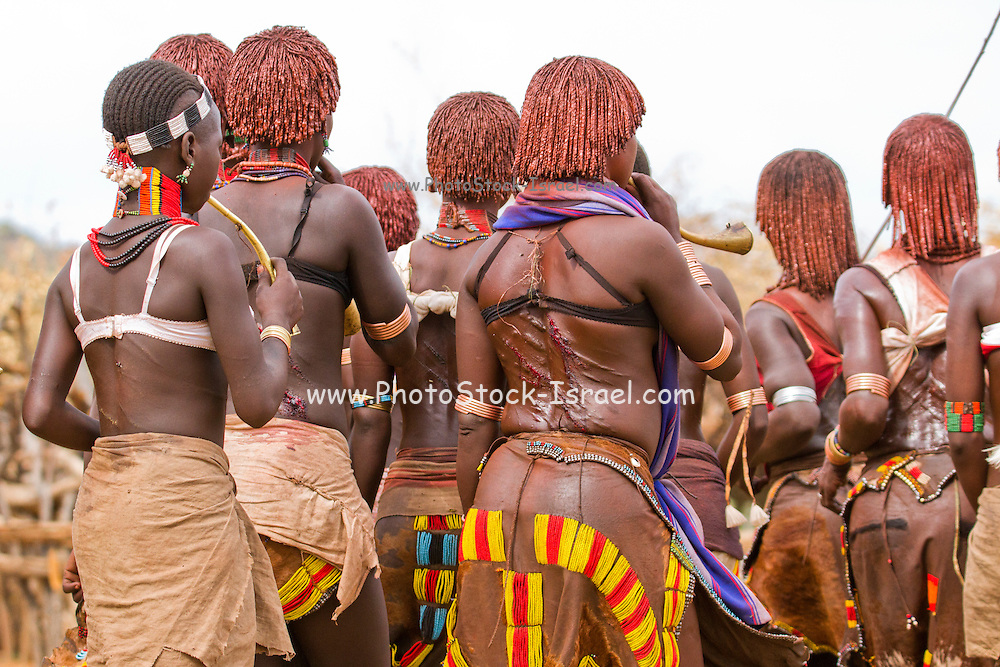 The raw scars on a Hamar woman's back after being whipped at a 'Jumping of the Bull' ceremony. Omo Valley Ethiopia