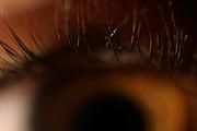 Belo Horizonte_MG, Brasil...Detalhes dos cilios de um olho...A cilia eye detail...Foto: LEO DRUMOND / NITRO