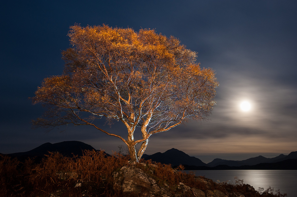Birch at moonrise, Loch Shieldaig, Torridon, Scotland
