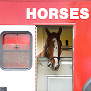 © under license to London News Pictures. LONDON, UK  11/05/2011. A horse waits in a horse box. The first day of The Royal Windsor Horse Show in the private grounds of Windsor Castle today (11 May 2011). Photo credit should read Stephen Simpson/LNP.