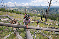Jeannette Boner and Kelsey Dayton ascend the east slope of the Mirror Plateau from Lamar Valley, visible in the distance, over dead and downed lodgpole pine trees in Yellowstone National Park.