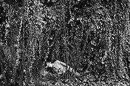 Napoli, Italia - Una veduta del parco divertimenti di Edenlandia a Napoli. Da circa due anni, lo storico parco versa nel totale abbandono. Edenlandia &egrave; il &egrave;arco divertimenti urbano pi&ugrave; grande del sud Italia. A giugno compir&agrave; cinquanta anni dall'apertura. Un gruppo di imprenditori prover&agrave; a donare l'Edenlandia nuovamente alla citt&agrave; di Napoli entro la prossima estate.<br /> Ph. Roberto Salomone