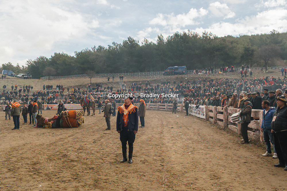 TURKEY, Izmir, Selçuk. Fans and camel owners and trainers stand still to sing the Turkish national anthem before the beginning of the 35th annual Selçuk Camel Wrestling Festival.