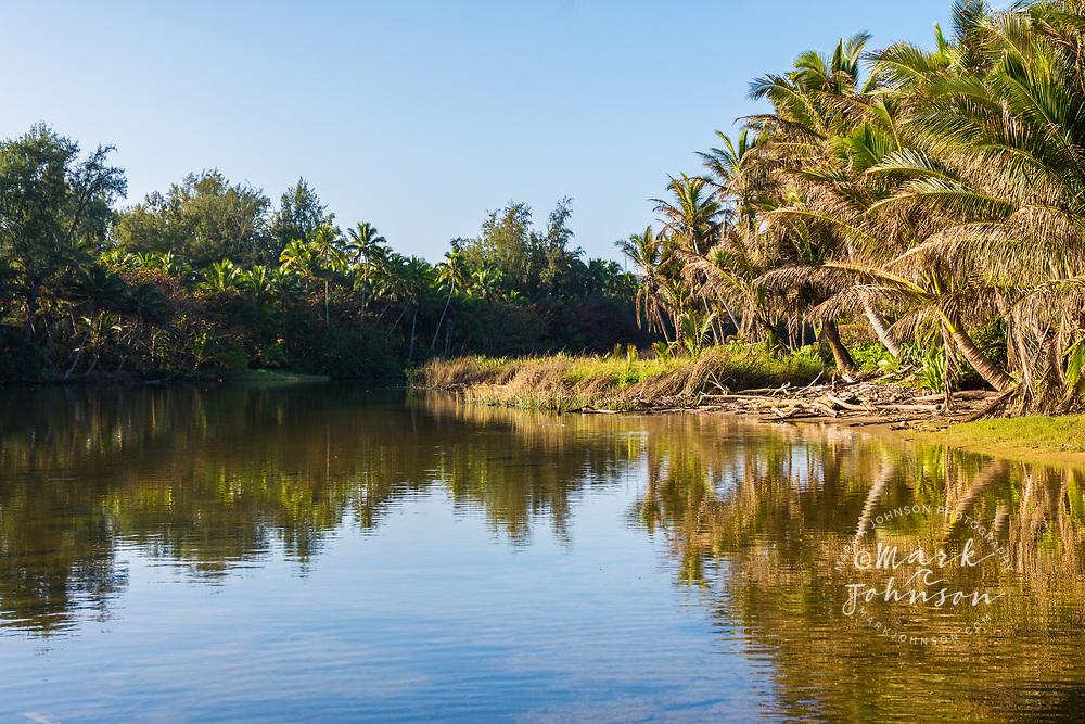 Coconut trees line the Anahola River, Kauai, Hawaii