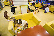 Hongdae. BAU house dog cafe?: pets and owners relaxing and having fun with friends.