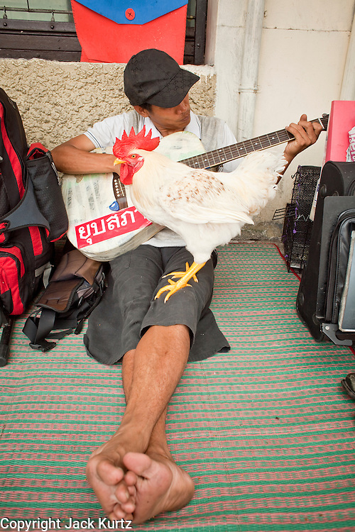 Mar. 30, 2010 - Bangkok, Thailand: A Red Shirt protestor plays guitar with a rooster in has lap near the Red Shirt staging area in Bangkok Tuesday. There were only a few thousand protestors at the scene Tuesday, down from 100,000 a week ago. The Thai government has asked the leaders of the Red Shirts to reduce the size of their protest as the number of protestors at the scene has declined in recent days. The Red Shirts have issued a formal answer to the request but said they have broken peace talks with the government and would intensify their protests in coming days. The Red Shirts want the government dissolved immediately, the government countered with calling new elections at the end this year, one year ahead of schedule. That was not acceptable to the Red Shirt leadership who than walked out of the talks and said no more would be held. The Red Shirts support former Prime Minister Thaksin Shinawatra, who was deposed in a coup in 2006 and went into exile rather than go to prison after being convicted on corruption charges. Thaksin is still enormously popular in rural Thailand.     PHOTO BY JACK KURTZ