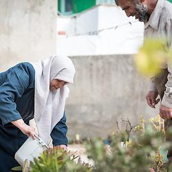 Home-based farming, Jordan 2020