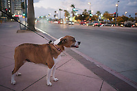 Side view of pet dog with collar belt on sidewalk