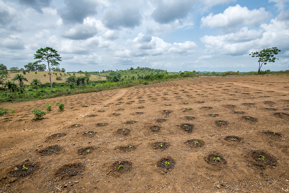 Rows of small pepper plants in the early stages of growth in Ganta, Liberia