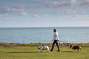 A dog walker with two dogs walking the coastal path  along Portland Bill, Dorset, UK.