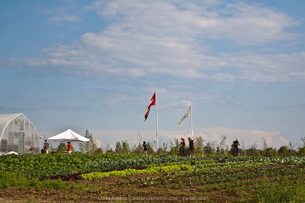 FoodCycles, an urban farm in Toronto's Downsview Park.