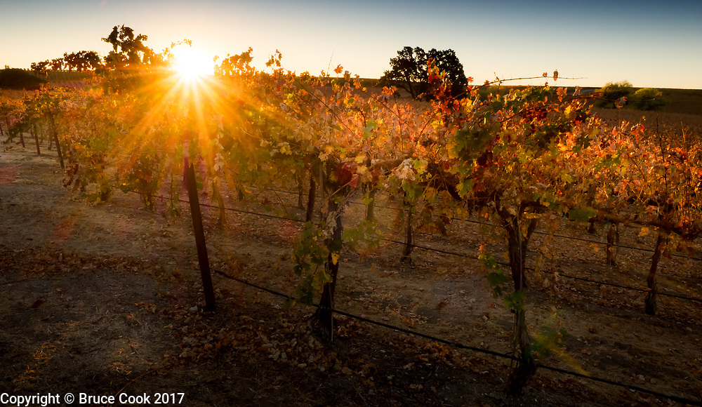 Sunrise Vineyard 2