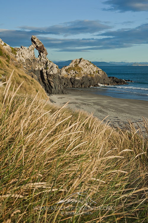 Sand Tussock at Keyhole Rock, Aramoana, New Zealand