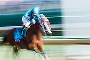Twinspires Breeders' Cup Sprint (Race 7) (Dirt) <br /> November 3, 2018: Roy H #9, ridden by Paco Lopez, wins the Twinspires Breeders' Cup Sprint on Breeders' Cup World Championship Saturday at Churchill Downs on November 3, 2018 in Louisville, Kentucky.